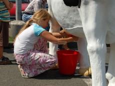 trenažer dojení kravičky