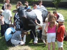 atrakce kráva
